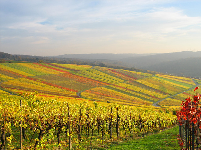 Vineyard Quilt of Nature in Autumn Colours, Germany
