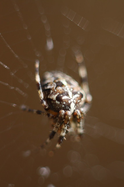 Spider Macro - 1 | F