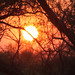 Small photo of Sunset in the African bush