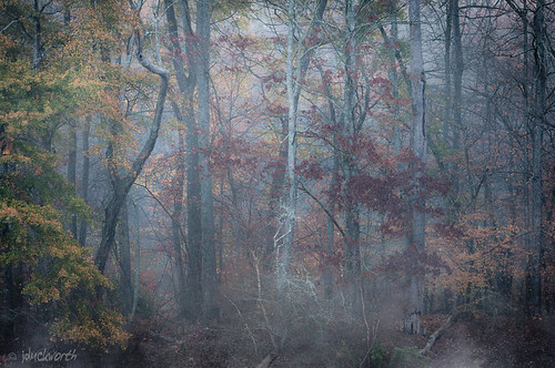 trees red orange mist cold colour green yellow fog backlight forest sunrise woods pretty crookedtrees lookatnaturescolours onwardintothefog