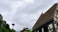 Baguette holen. Störche glotzen. #Mietesheim #VisitAlsace - Photo of Obermodern-Zutzendorf