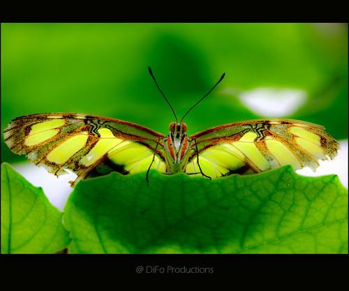 Schicksal oder Schmetterlingseffekt