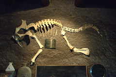 velociraptor(0.0), tyrannosaurus(0.0), skeleton(1.0), dinosaur(1.0),