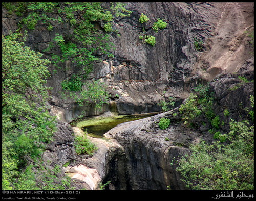 world trees tree nature lumix raw hole sink natural large panasonic greenery cave oman fz sinkhole 48 largest tawi zufar 48th rw2 salalah deepest sultanate dhofar عمان khareef طبيعة سلطنة خريف صلالة dufar صلاله ظفار الخريف محافظة attair موسم atair dhufar حفرة governorate كهف dofar fz38 fz35 dmcfz35 طوي عتير اعتير atayr إذابة جيرية