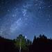 Galactic scarecrow tree by masahiro miyasaka