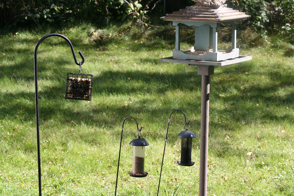 Bird Feeders, Stirling Ontario_3457