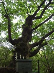 温泉神社 - 栃木県那須郡那須町湯本