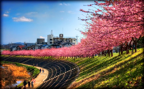 pink flowers red smile japan clouds photoshop canon landscape spring aperture 日本 cherryblossoms hdr aichiprefecture 春 愛知県 fav10 mikawa photomatixpro 岡崎市 eos450d kawazuzakura 本州 中部地方 davidlaspina efs55250mmf456is rebelxsi kissx2 chūbu topazadjust 55250efsis okazakicity japandave japandavecom 三河国 honshū