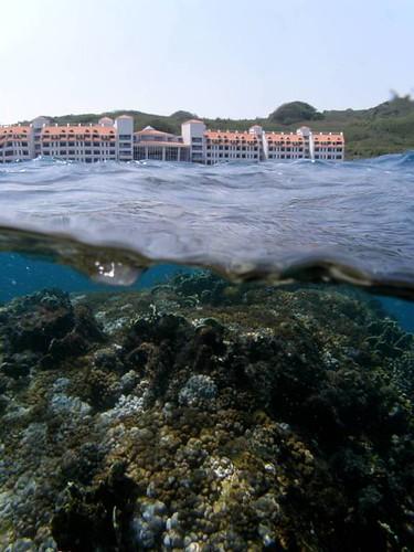 美麗灣前50公尺處就有珍貴的珊瑚礁。(圖片來源:中央研究院生物多樣性研究中心 珊瑚礁演化生態與遺傳研究室)