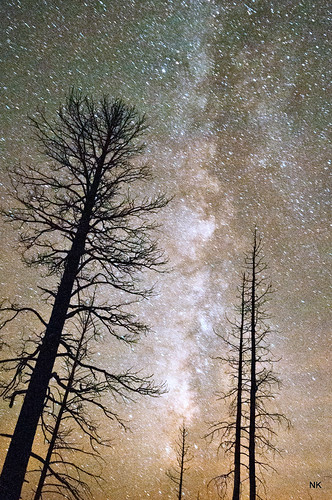 Trees on Fire! and so is the sky! It's the Milky Way Galaxy!