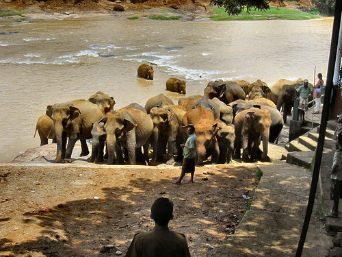 ELEPHANTS BATH TIME. 3 SRI LANKA.