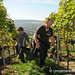 Working the Steep Vineyard Slopes -