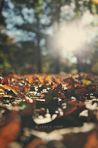 morning autumn sun fall leaves photography leaf october flare jaelxander