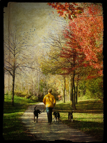 dog walker by kim/ber