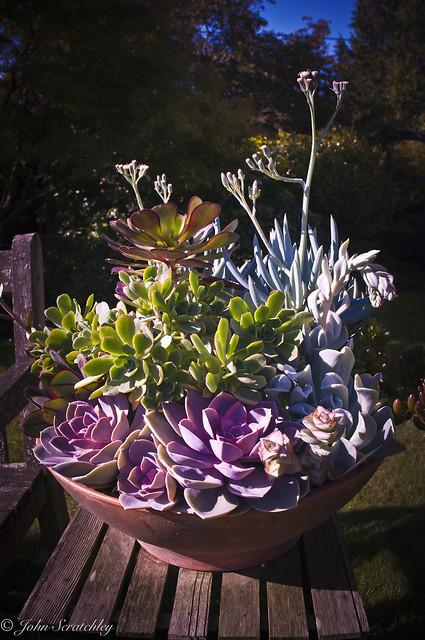 Succulent pot (view as large size)