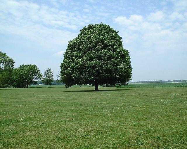 nice view evergreen trees - photo #20