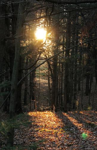 park autumn sunset sun canada fall forest quebec scene gatineau