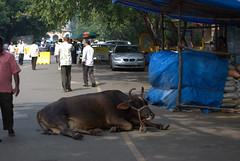 bombay stock exchange bull