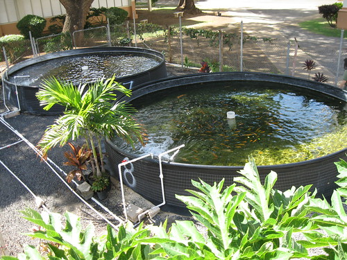 How much would setting up an recirculating aquaculture for Fish farming at home