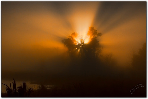 nature water birds fog sunrise florida wildlife marsh lakeland circlebbarpreserve