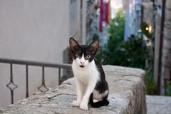 Un altre gat a Dubrovnik