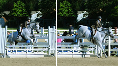 physical exercise(0.0), animal sports(1.0), equestrianism(1.0), english riding(1.0), modern pentathlon(1.0), stallion(1.0), show jumping(1.0), hunt seat(1.0), equestrian sport(1.0), sports(1.0), recreation(1.0), outdoor recreation(1.0), equitation(1.0), horse(1.0), person(1.0),