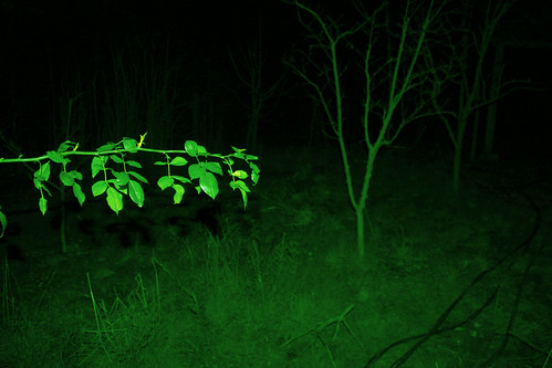 Green on black (night vision)