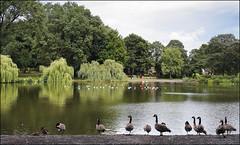 Handsworth Park Walk 8/10 (fv15)