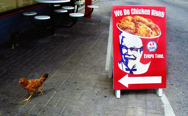 Funny Kfc Signs: A Sign (and Chicken) For KFC In Grand Cayman.