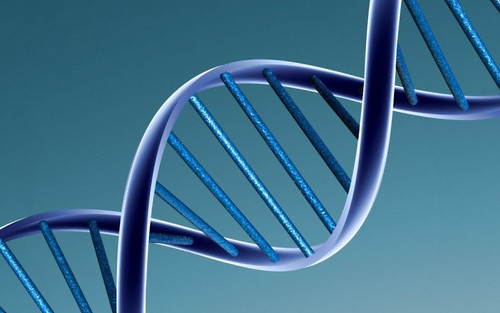 DNA model