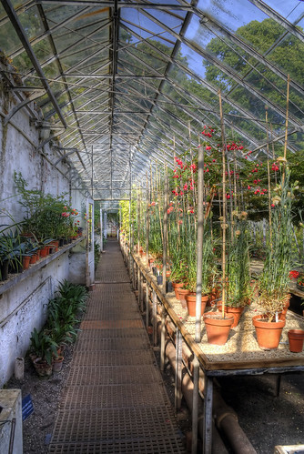 Greenhouse at Tynsfield