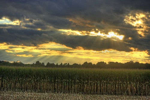 life autumn sunset sunlight storm fall nature clouds rural landscape corn farming harvest scenic stormy fields upstatenewyork farms centralnewyork rays beams sunbeams elbridge