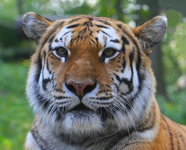 asian tiger porn star vs the forces of evil porn comic