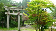 botanical garden, tree, plant, shinto shrine, shrine, torii,