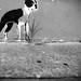 COOLIDGE Dog - Houston Graffiti by @iseenit_RubenS   R.Serrano Photography