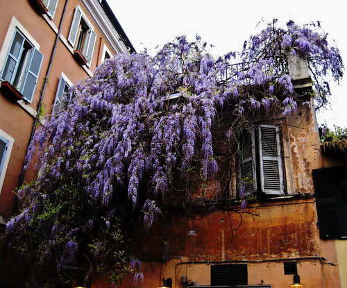 purple rain by rita212