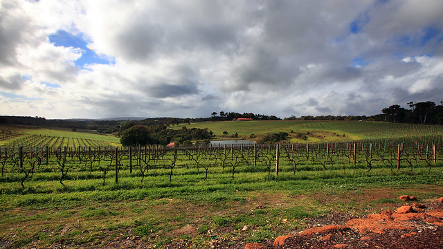Wills Domain Vineyard