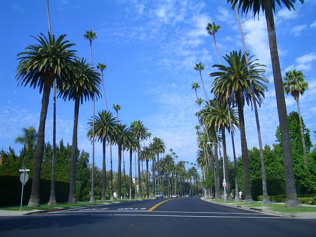 Palm Tree Lined Streets in Beverly Hills