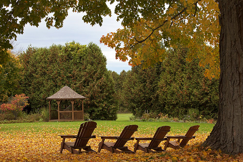 travel autumn trees orange ontario color colour tree green fall colors leaves yellow garden leaf chair grafton fallfoilage canoneos5dmarkii