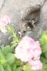 my cat & hydrangea