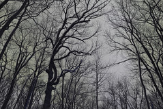 The Tree's Fingers Could Touch the Sky