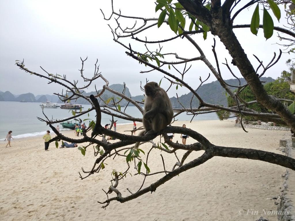Monkey island halong bay 5
