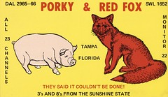 Porky & Red Fox - Tampa, Florida
