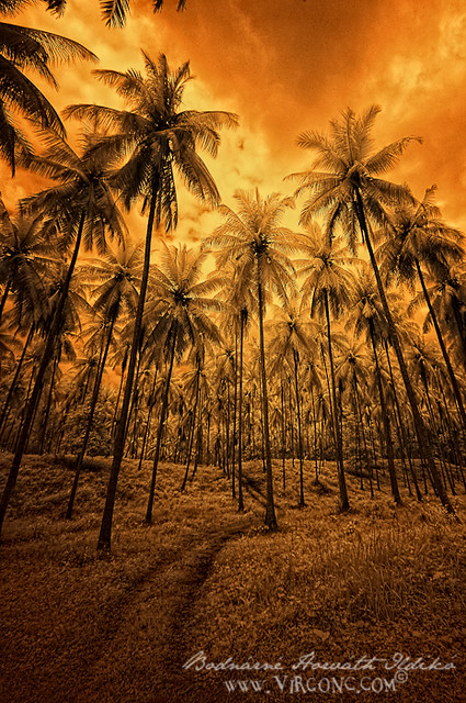 (Na)palm
