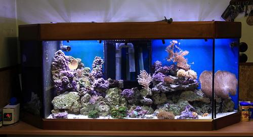 Aquarium eau de mer 400l for Aquarium en solde