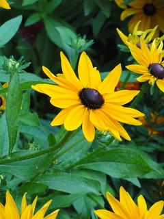 Flowers of Cote d'Azur