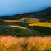 Iceland - Akureyri: Fields of Gold