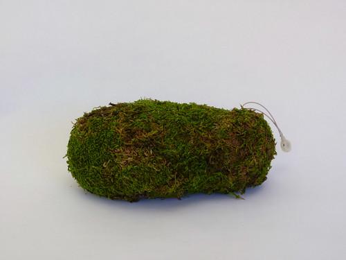 "Misako Inaoka ""Moss Worm"""
