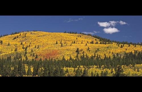 colorado gold aspen tree fall autumn foliage mountain blue sky clouds breckenridge diamondclassphotographer flickrdiamond 201009