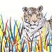 Tiger by www.sandradieckmann.com